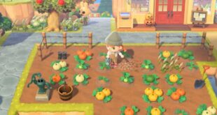 Where do I find Pumpkins in Animal Crossing: New Horizons?