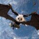How to get the winged mount and the airship in Biomutant