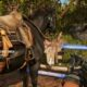 List of all types of horses and their location in Far Cry 6