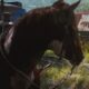 How to get the Spanish Marchador horse in Far Cry 6